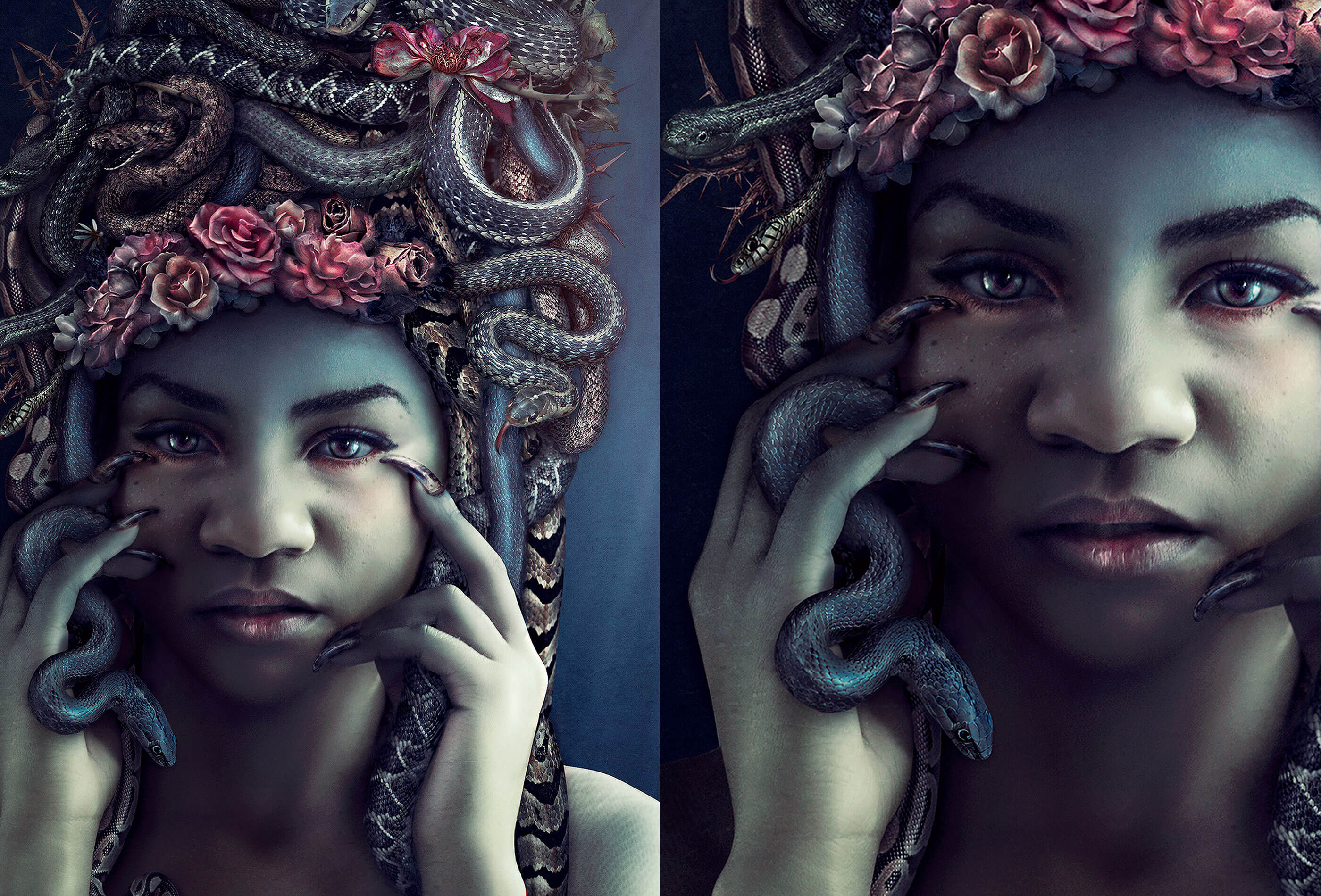 medusa-full_retina-compressed